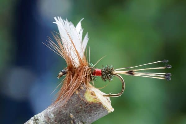 Dry Flies for Trout Fishing After Rain