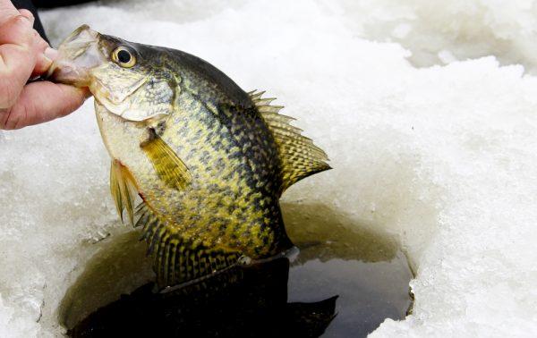 Shallow Ice Fishing