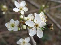 IMG_8945 blossom (Custom)