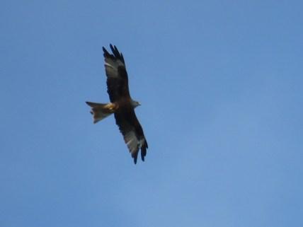 IMG_0822 kite