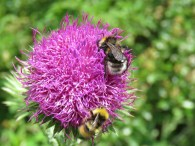 IMG_6128 bees