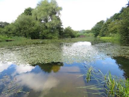 IMG_7589 Sizergh castle gardens