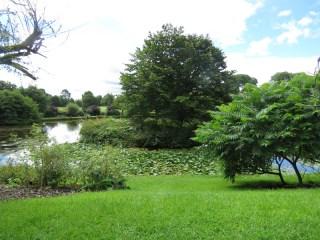IMG_7634 Sizergh castle gardens
