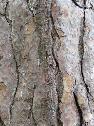 img_0303-bark