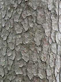 img_0322-bark