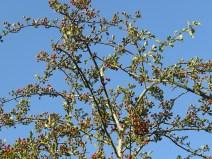 img_9797-berries