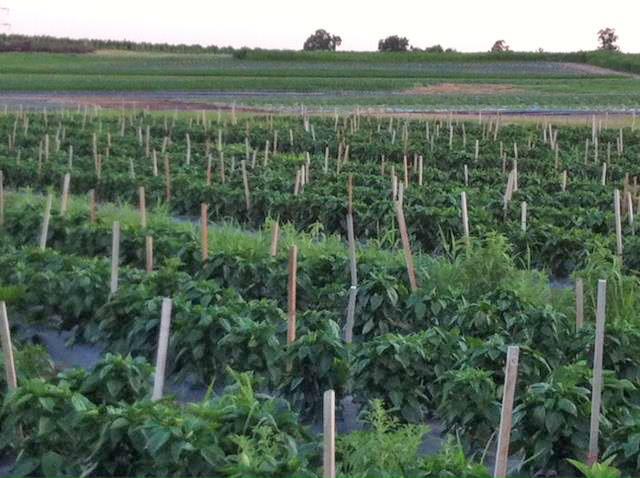 Hometown Harvest in Frederick, MD: Delivering to MD/DC/VA