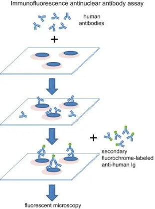 Microsoft PowerPoint - Fig 1 IIF ANA Method Jan6