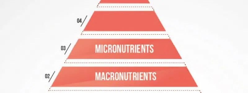 Fitness voeding 101: Micronutiënten
