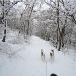 Зима в Пушкинском доле