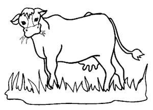 схема корова ест траву
