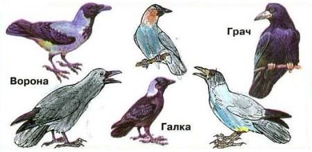 Зачем птицам перья?