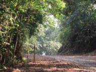 Saatkosia Tiger Reserve core area