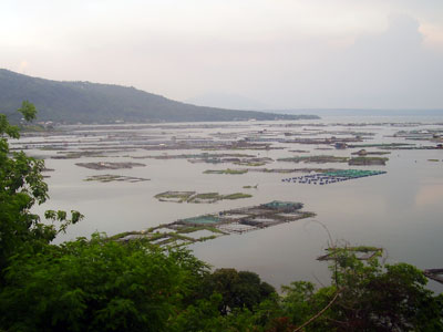 Illegal fish cage operations poison Taal lake