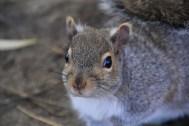 Un petit squirrel
