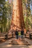 Au pied de l'arbre le plus gros du monde