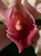 erotic-flowers-dick