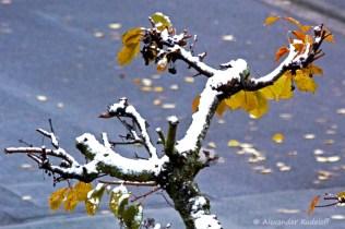 foto-68b-80-wintereinbruch
