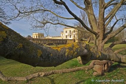 Foto-72a-(19)-Schloss-Orangerie