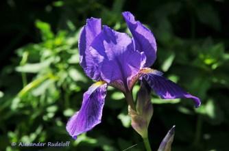 Foto-73d-(51)-Gartenkunst
