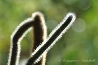 Foto-68e-(01)-Asymmetrie
