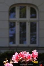 Foto-74-(254)-windows