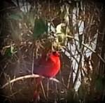 Winter Bird Put in Bay