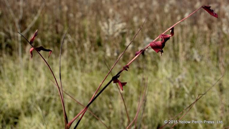 Scheef Nature Preserve