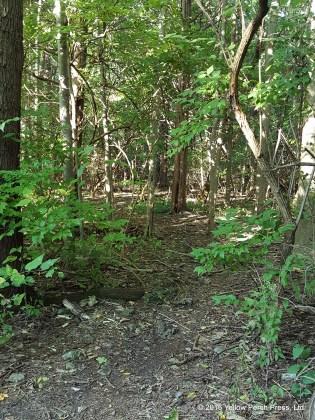 Shady Path Put in Bay