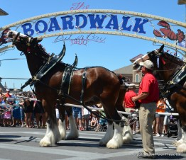 Put in Bay Clydesdales