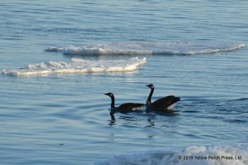 Lake Erie ice floe