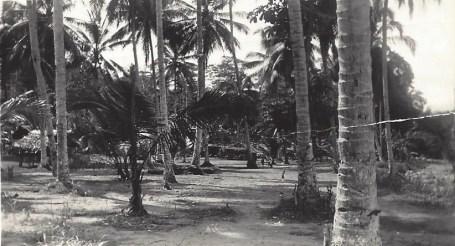 Native Village \New Guinea Jan. 1945