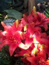 Some pretty flowers inside the Bio-Dome