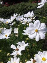 Flowers in Queen Elizabeth Park
