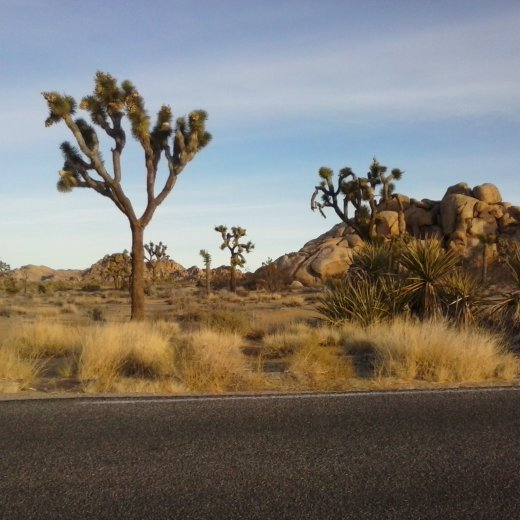 road trip, spiritual road trip, spiritual journey, self discovery, joshua tree national park