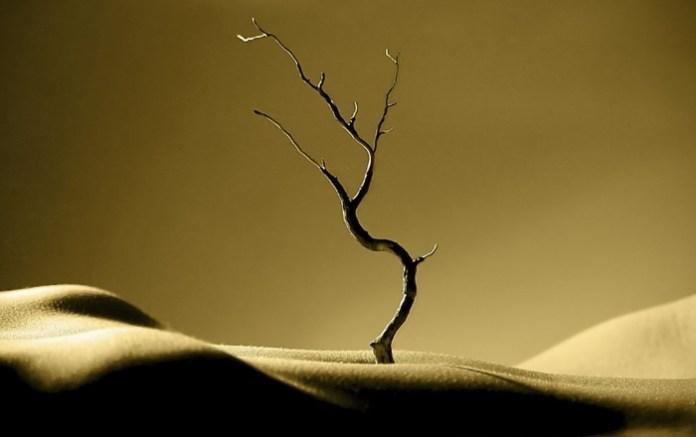 Pustinja drvo