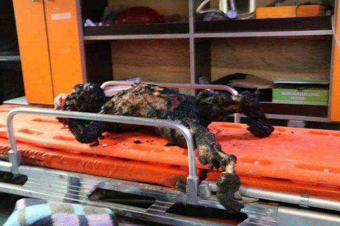 Fotografija sirijskog mališana ugljenisanog u zračnom udaru ruskih kršćanskih terorista na Han Šejhun, 17. decembra 2017. godine