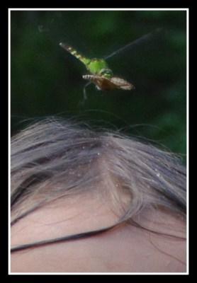jessa bug2