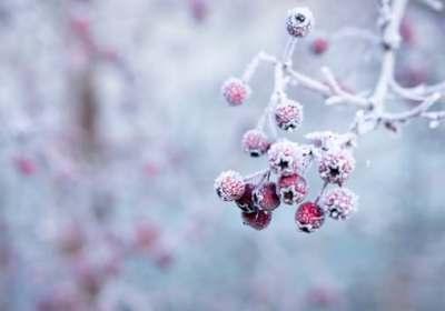 Sneeuw,