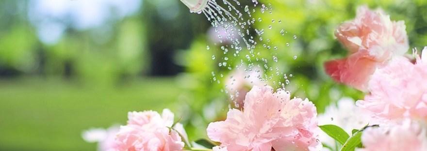 onderhoudsvrije-tuin-tips-puurvangeluk