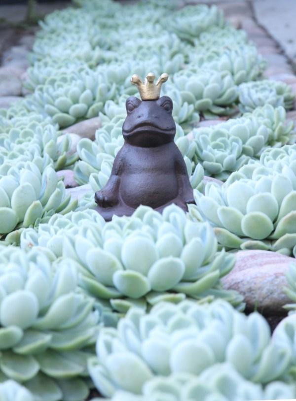 Kruunu päässä istuva sammakko