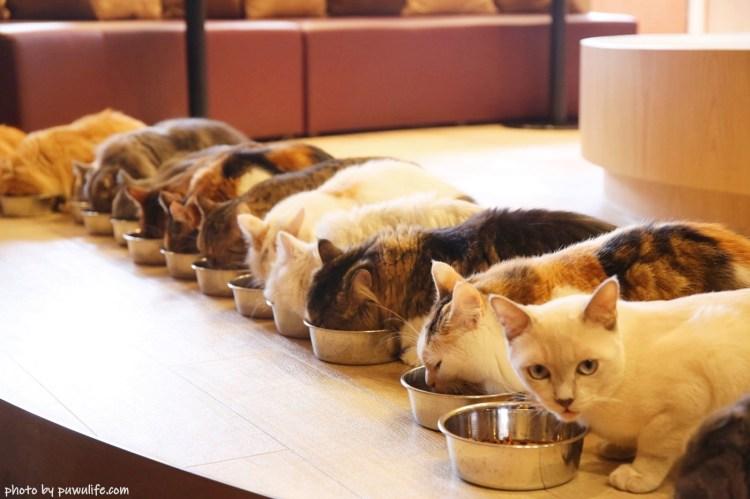【東京自由行】東京貓咪咖啡廳.CAT CAFE MOCHA.有WIFI、插座、飲料喝到飽!