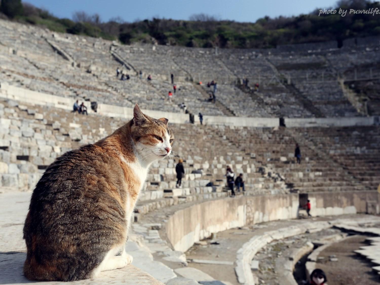 【土耳其】土耳其的愛貓文化,貓咪與貓奴的天堂❤