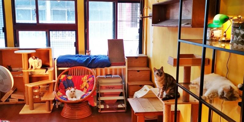 【貓男咖啡】蘆洲區。愛心中途,領養不棄養!新北不限時貓咪咖啡❤