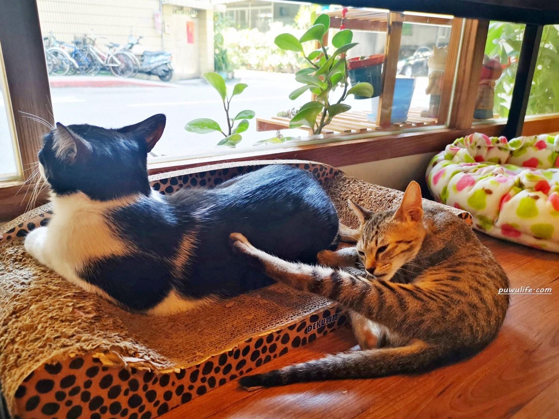 【曬貓咖啡】大安區。貓咪陪你吃早餐,科技大樓平價輕食咖啡❤