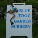 Blue Frog Garden Nursery Logo