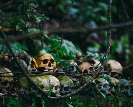 Skulls deteriorating in the jungle
