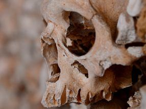 Deteriorating skull in a tomb