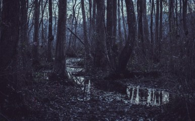 Dark and spooky swampland
