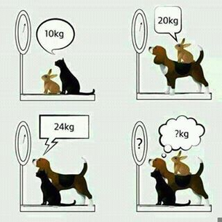 rabbit, cat and dog on weighing scale